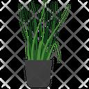 Lemon Grass Plant Icon