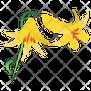 Lilium Parryi Lemon Lily Nature Icon