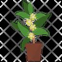 Lemon Myrtle Plant Icon