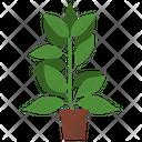 Lemon Potted Plant Icon