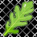 Lettuce Leaf Lettuce Vegetable Icon