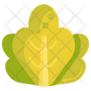 Lettuce Vegetable Healthy Food Icon
