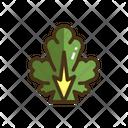 Lettuce Leaf Vegatable Icon