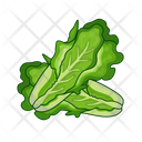 Lettuce Salad Meal Icon