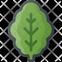 Lettuce Salad Health Icon