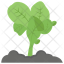 Lettuce Plant Growing Seed Salad Icon