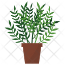 Licorice Potted Plant Icon