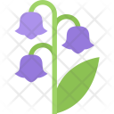 Lily Of The Icon