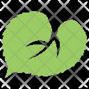 Linden Plant Tree Icon