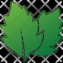 Linden Leaves Logo Leaves Logo Eco Leaves Icon