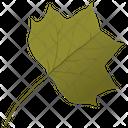 Yellow Poplar Tulip Leaf Leaf Icon