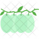 Lichee Lichii Food Icon