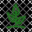 Little Tree Icon