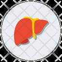 Liver Human Liver Organ Icon