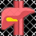 Liver Health Human Icon