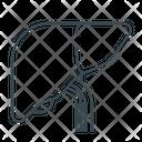 Gall Liver Organ Icon