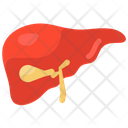 Liver Hepatology Hepatic Icon