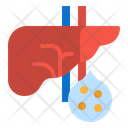 Liver Physiology Healthcare Icon
