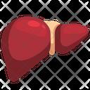 Liver Organ Body Part Icon