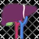 Liver Hepatic Vein Healthy Icon