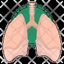Liver Anatomy Organ Icon