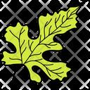 Lobate Leaf Foliage Icon