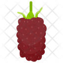 Loganberry Berry Fruit Black Currant Icon