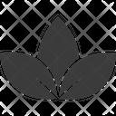 Lotus Lotus Lily Lotus Lily Flower Icon