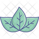 Flower Lotus Lotus Lily Icon
