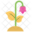 Lily Bud Lotus Flower Icon