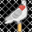 Wedding Pigeon Love Pigeon Wedding Bird Icon