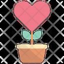 Love Pot Icon