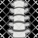 Vertebral Column Human Spine Spinal Cord Segment Icon