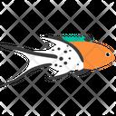 Lyretail Hogfish Icon