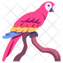 Macaws Icon