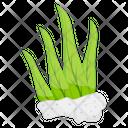 Seaweed Aquaculture Marine Alga Icon