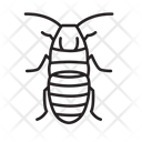 Madagascar Hissing Cockroach Bug Insect Icon