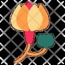 Magnolina Icon