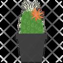 Mammillaria Potted Plant Icon