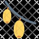 Mango Vitamins Healthy Icon
