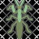 Mantis Icon
