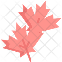Maple Autumn Leaf Icon