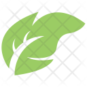Maple Ash Plant Tree Icon
