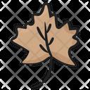 Maple Leaf Foliate Nature Icon