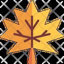 Maple Leaf Autumn Maple Icon