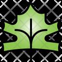 Maple Leaf Tree Nature Icon