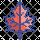 Maple Leaf Leaf Autumn Icon