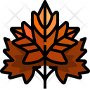 Maple Leaf Maple Leaf Icon