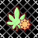 Maple Leaf Castor Bean Icon