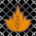 Maple Leaf Leaf Nature Icon